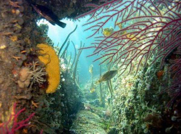 Recuperación da biodiversidade mariña
