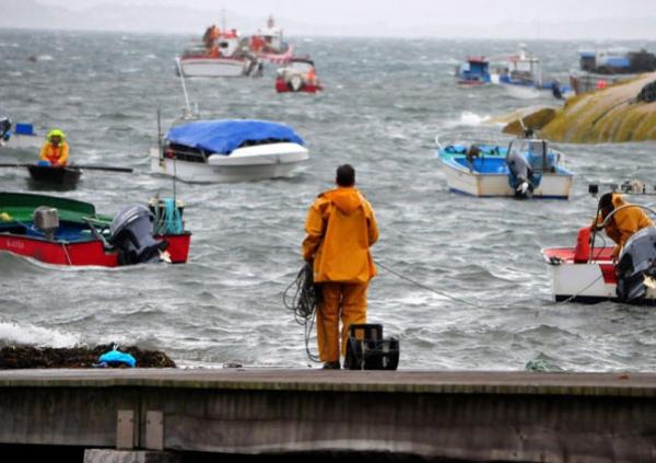 Bolsas de ordenación pesqueira