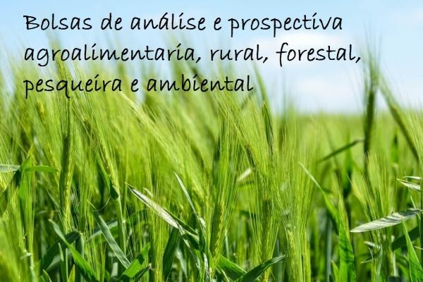 Bolsas de análise e prospectiva agroalimentaria, rural, forestal, pesqueira e ambiental