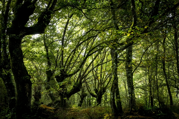 VII Concurso de Fotografía Reservas da Biosfera