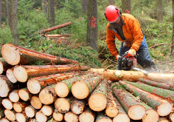Actividades formativas na  industria forestal