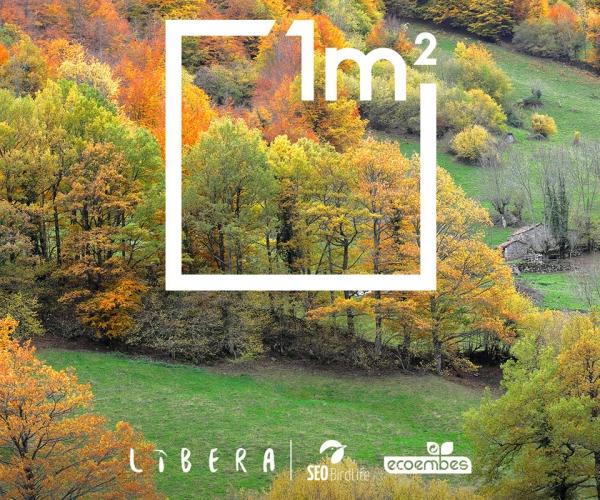 1 m2 polo campo, os bosques e o monte