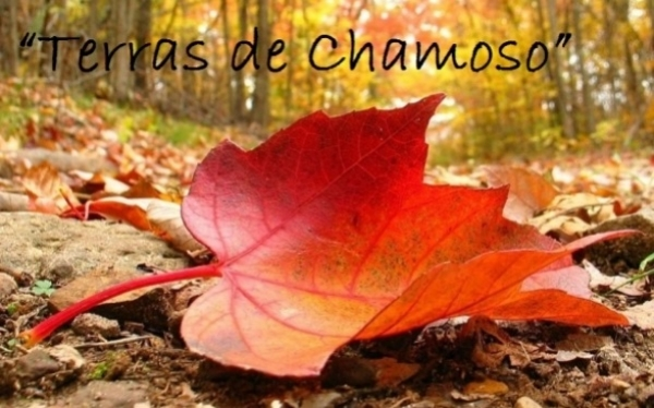 """XIV certame literario """"Terras de Chamoso"""""""