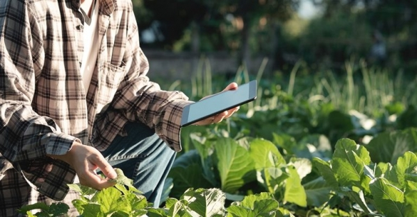 Bolsas relacionada coa política agrícola común e o seu financiamento