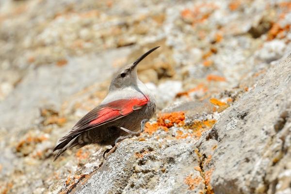 Sorteo de 4 prazas dobres para unha excursión ornitolóxica a Irati e outros espazos navarros
